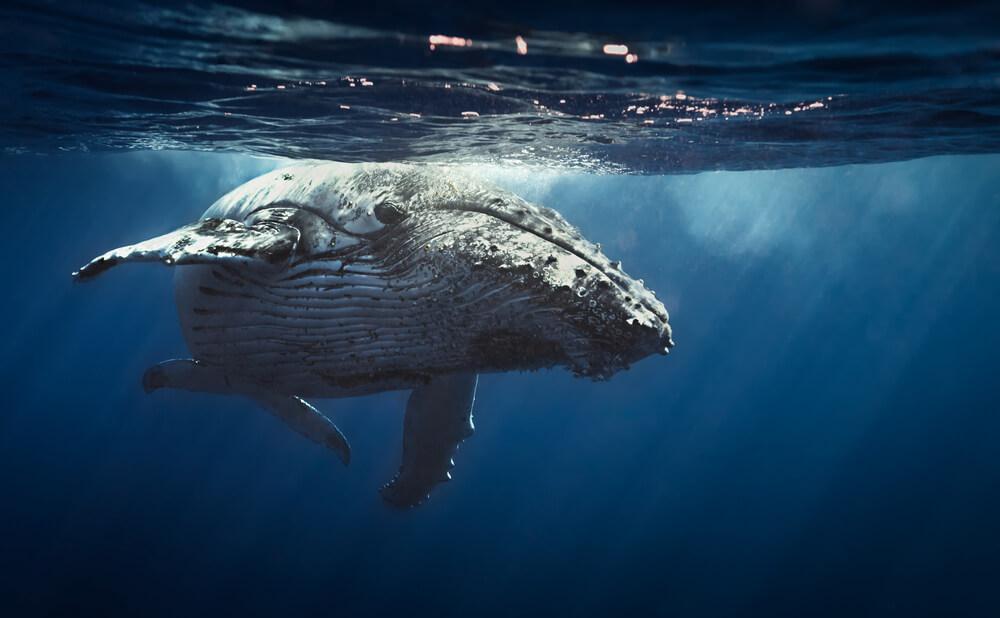 ビットコインを狙ったクジラが出現